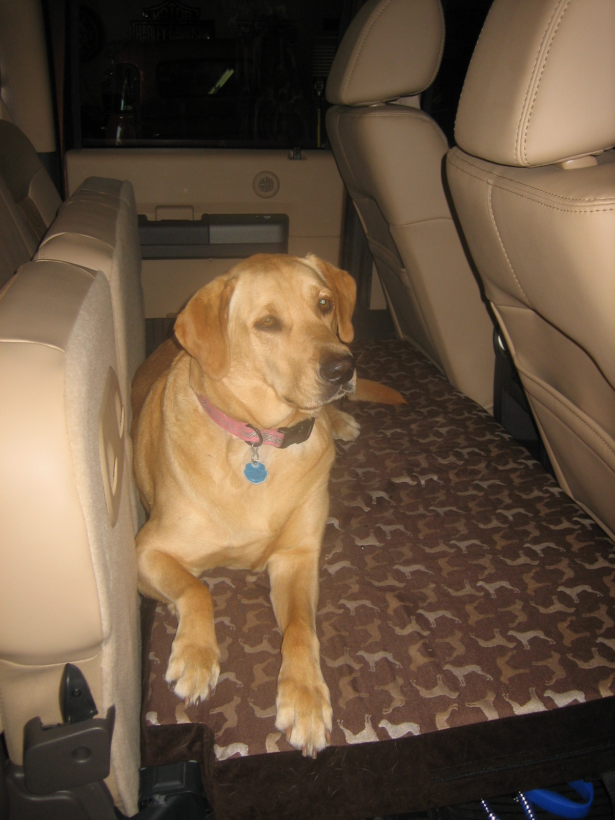Dog Bed for the Rear Seat Fold Out Platform-maggie-1.jpg