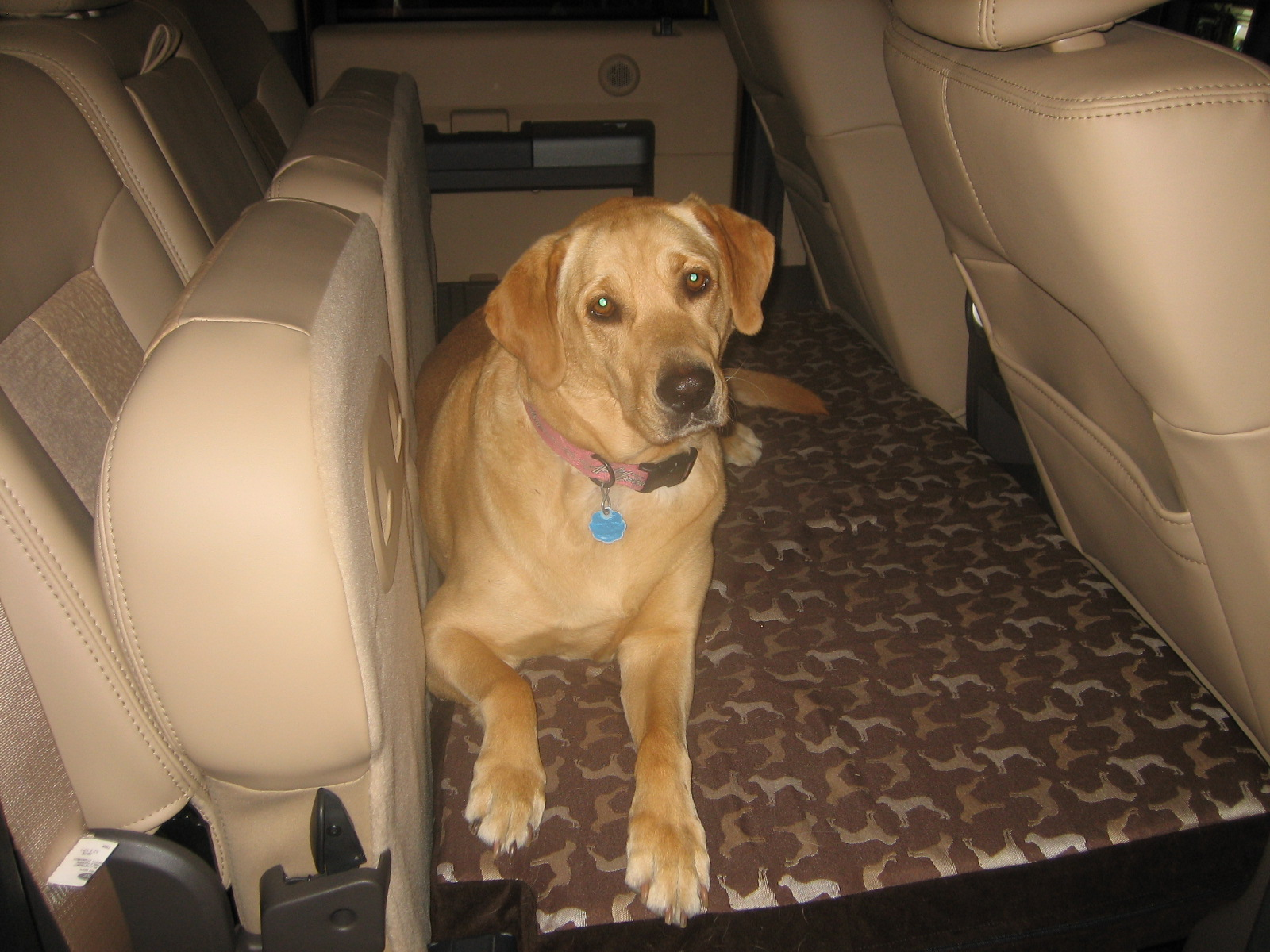 Dog Bed for the Rear Seat Fold Out Platform-maggie-2.jpg