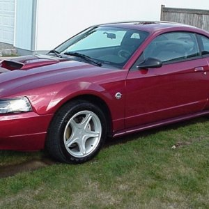 2004 'stang GT