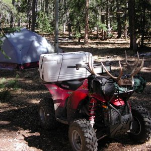 Quad in elk country